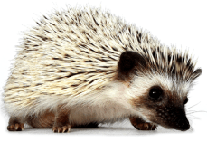 (Hello Hedgehog, 2012)