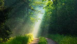 Sunlight shines down through trees on a road through a forest.