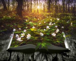Flowers emerge from the pages of a book in a dark forest.