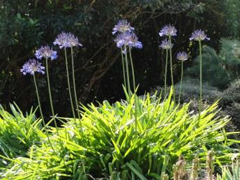 Dunedin Flowers