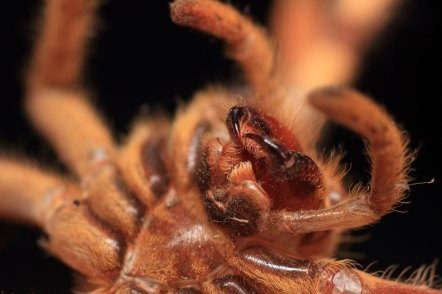 Spider Bug Insect Macro Macro Photography