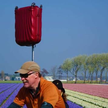 Tulip Season Holland - 7 Million Flower Bulbs Bloom In Spring