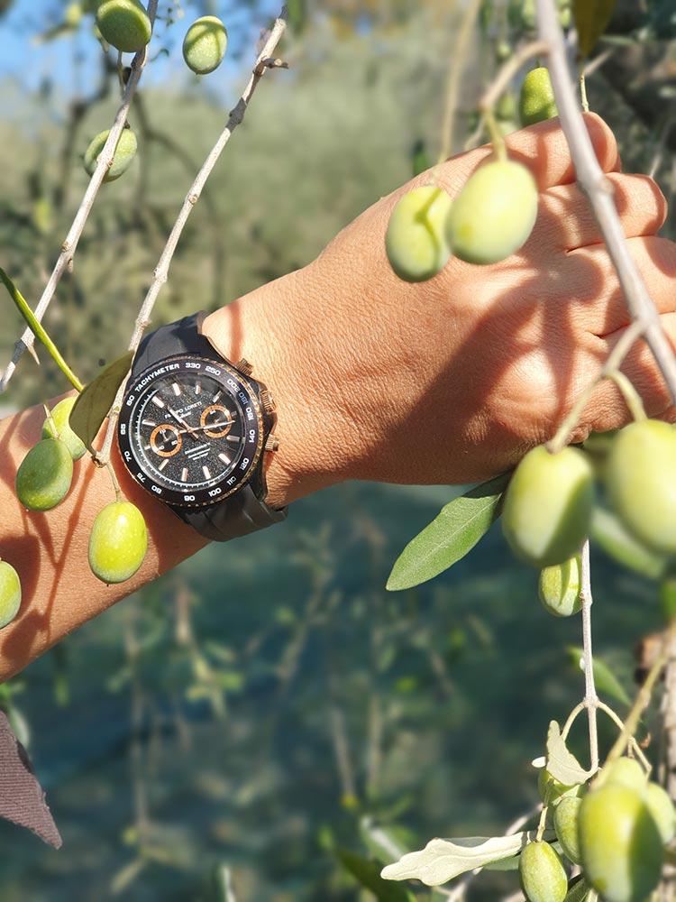 Fattoria Mansi Bernardini Gracie Opulanza 2020 Olive Trees (1)