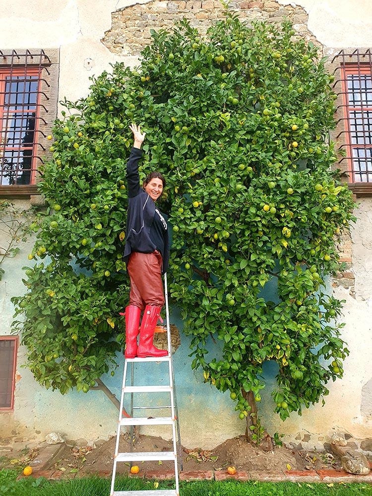 Fattoria Mansi Bernardini Tuscany Italy 2020 (12) lemons