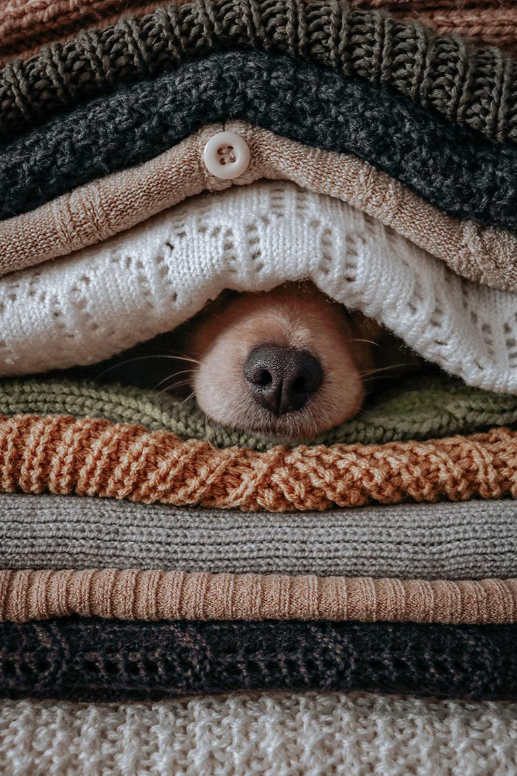 blanket 2021 fashion (2) dog