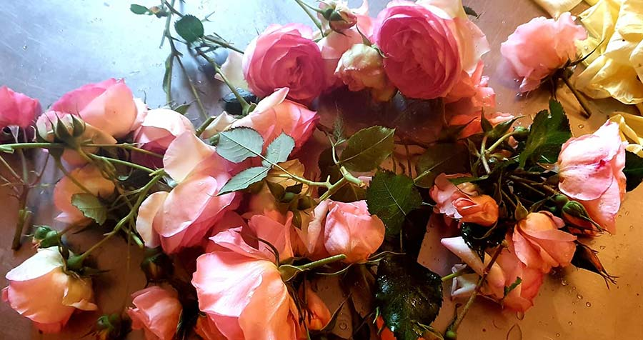 Roses – Healing To The Mind And Soul