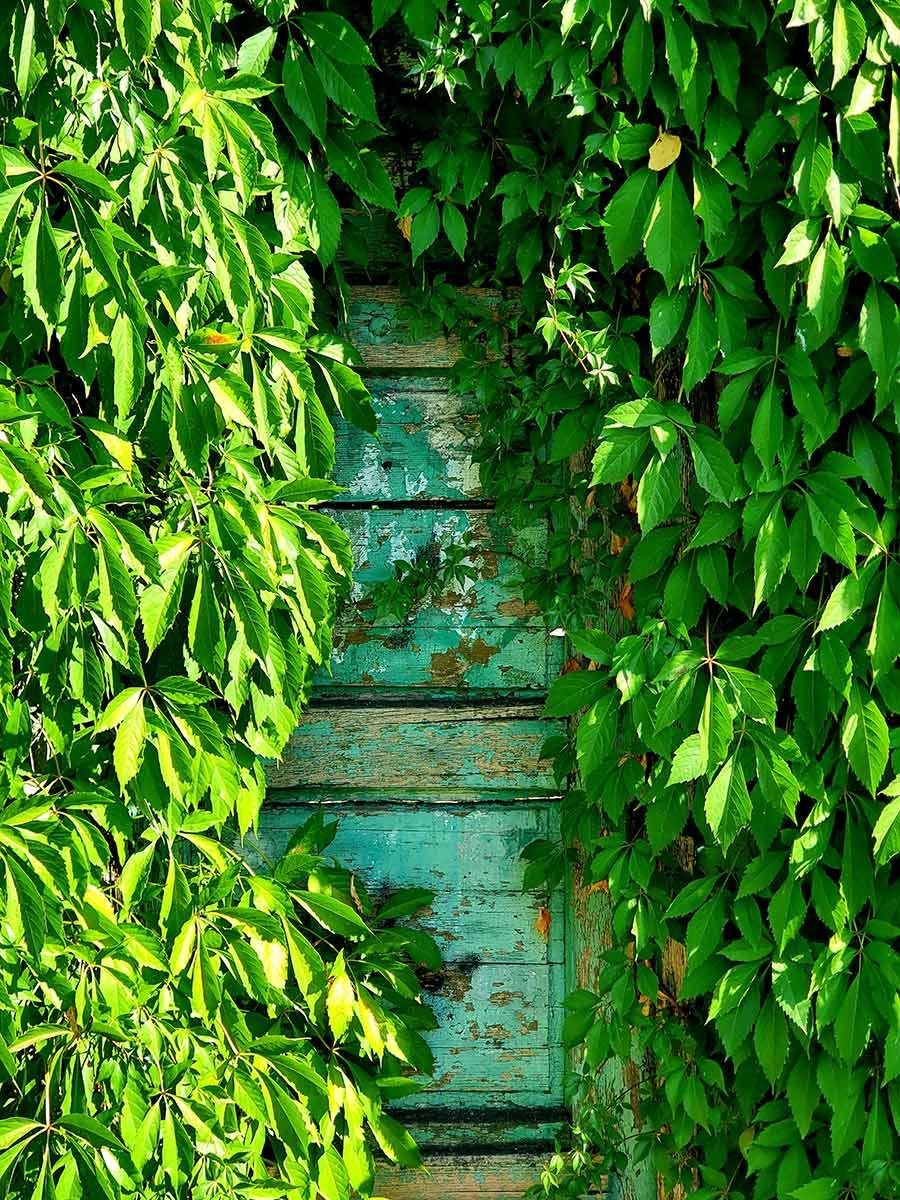 autumn doors leaves