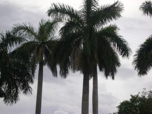 Florida 064