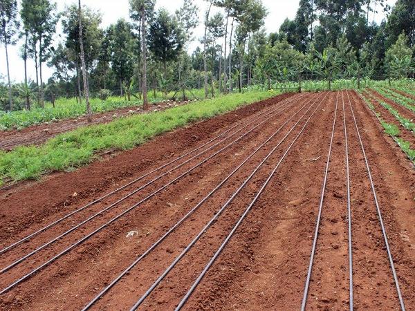 Drip Irrigation Kits And Components Graduate Farmer
