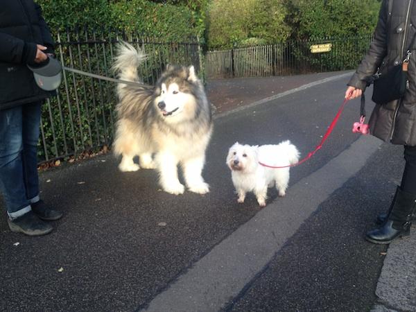 dogs regents park