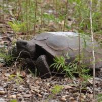 Tortoise Olympus - Nikon Imaging