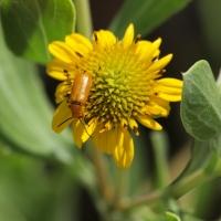 Plant and beetle Olympus - Nikon Imaging