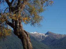 Golden kowhai frame the view of...