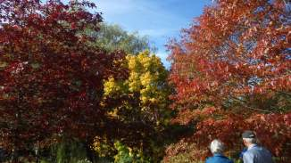 pin oak, linden(lime) and red oak