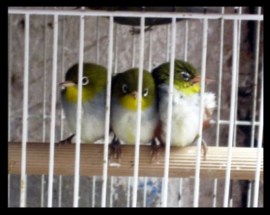 AT THE BIRD  MARKET
