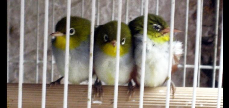 BIRD MARKET, LOCAL HANDCRAFTS AND RELAXING
