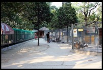 PART OF THE BEIJING CANINE ZOO