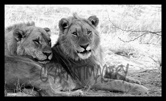 BROTHERLY LOVE..image from Botswana Africa