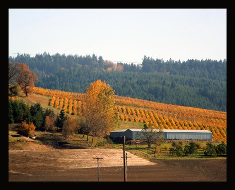 Vineyards of the Willamette Valley