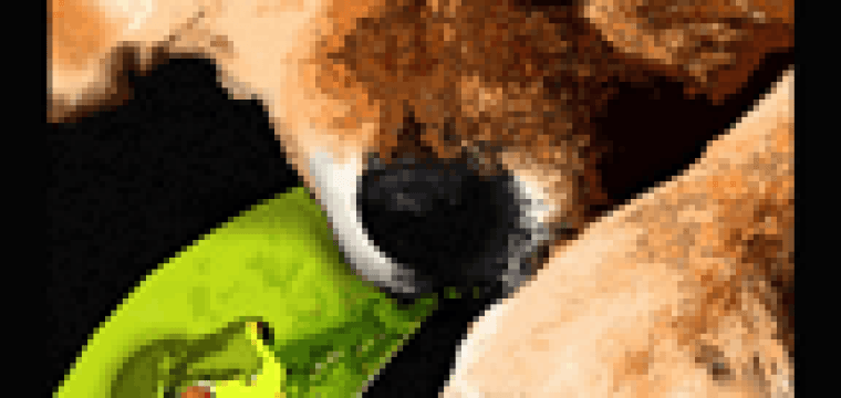"""INTRODUCING  """"FROG DOG"""" a new Chow print released today!!"""