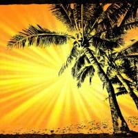 Palmy w słońcu