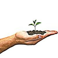 Roślina roślinka rośnie na dłoni