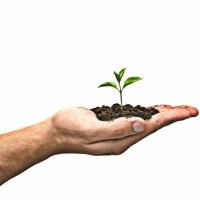 Roślinka rosnąca na dłoni ramie roślinka zielona ziemia