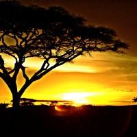 Zachód słońca na sawannie drzewa niebo promienie słońca