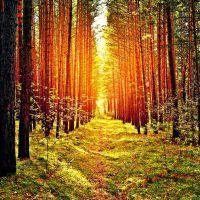 Słońce rozdzierające las ścieżka drzewa