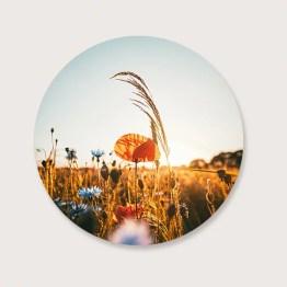 Bloemenveld muurcirkel