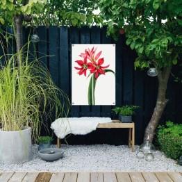 Amaryllis tuinposter