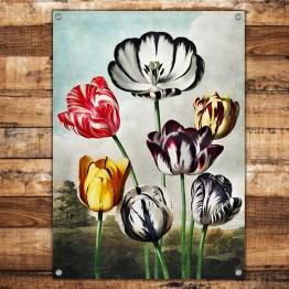 Tuinposter tulp