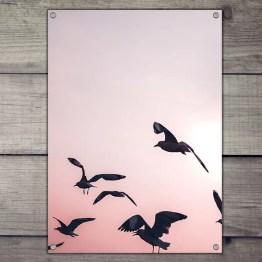 Tuinposter vogels sunset