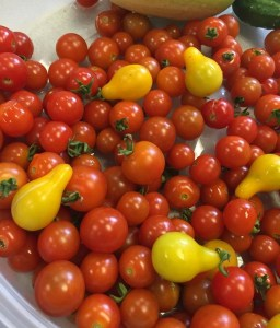 Yellow pear and red cherry tomatoes harvest
