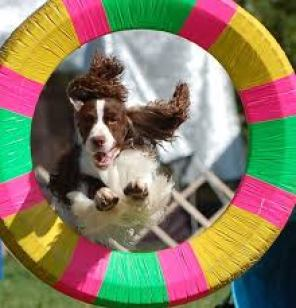 dog agility hypnosis