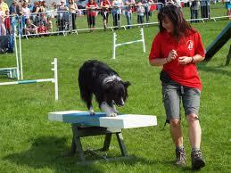 hypnosis dog agility confidence