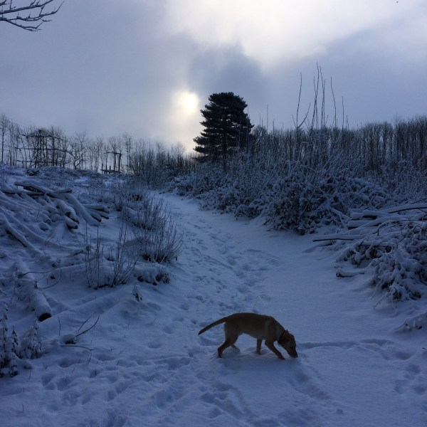 how-snow-reminds-me-grateful