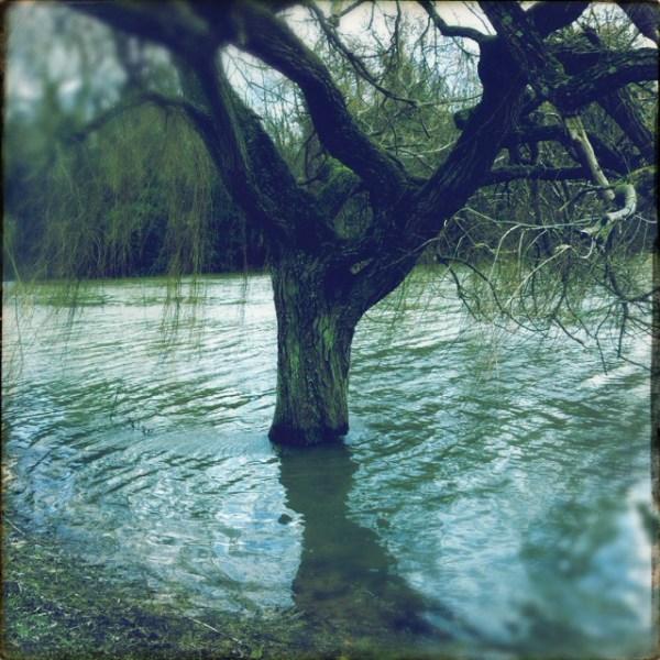 tree-under-water