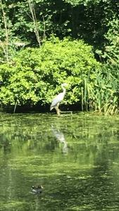 bird-on-lake
