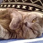 Comme un dimanche...#nothingsordinary #bluecat #cats #catoftheday #catstagram #chartreuxofinstagram #chartreuxlove #mycatgallery #cat #peluche #caturday #meow #pet #flowmagazine #flowpetitsplaisirs #flowpetitsplaisirs_gris