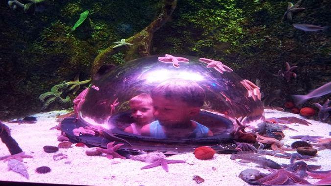 Aquarium Sea Life d'Istanbul en Turquie