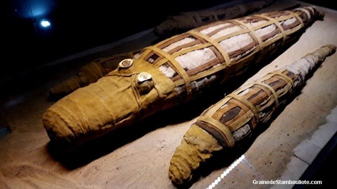 momie de crocodile, musée de Kôm-Ombo, Haute Egypte