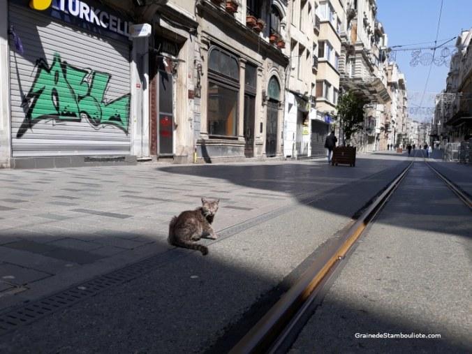 avenue istiklal istanbul pendant confinement avec chat