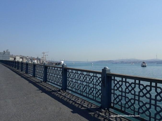 goéland sur le pont de Galata istanbul d'habitude avec des pêcheurs