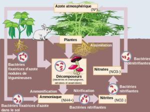 la fertilité des sols