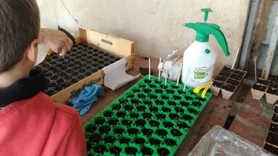 Plaques à semis et jeune pousse au labeur