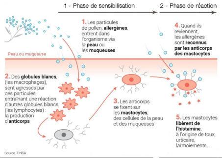 phases allergies hypnothérapeute séance hypnose montpellier hypnose paris 15