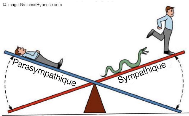 sympathique parasympathique hypnothérapeute séance hypnose paris 15