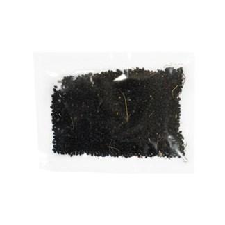 Черная бузина (плоды)