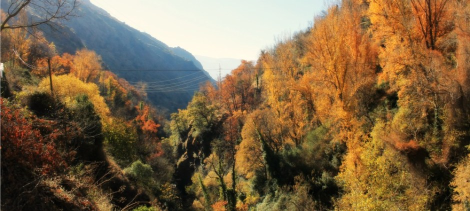 AutumnPampaneira1000